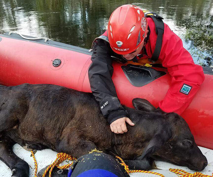 animal rescue boat operations training