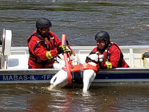 animal rescue specialist course2