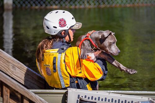 animal rescue specialist training