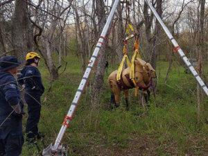 large animal rescue operations course2